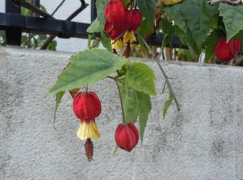 路傍の花、樹々の鳥(357) ~ 晩秋に咲く ~_b0102572_09303512.jpg