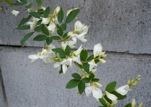 路傍の花、樹々の鳥(357) ~ 晩秋に咲く ~_b0102572_09314981.jpg