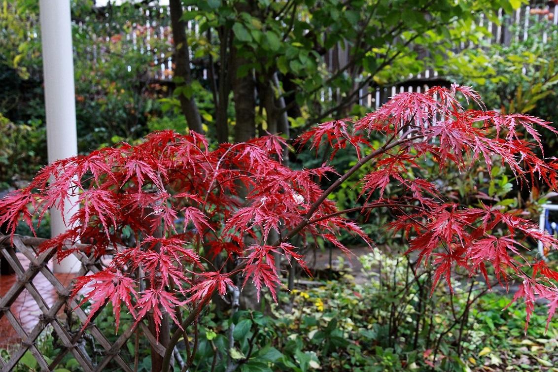 紅葉の色いろいろ_a0107574_14013313.jpg
