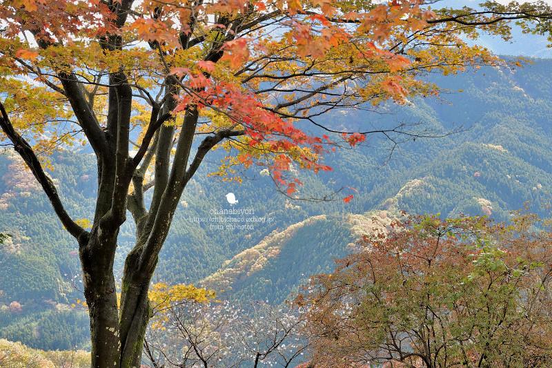 冬の桜_c0319774_22550611.jpg