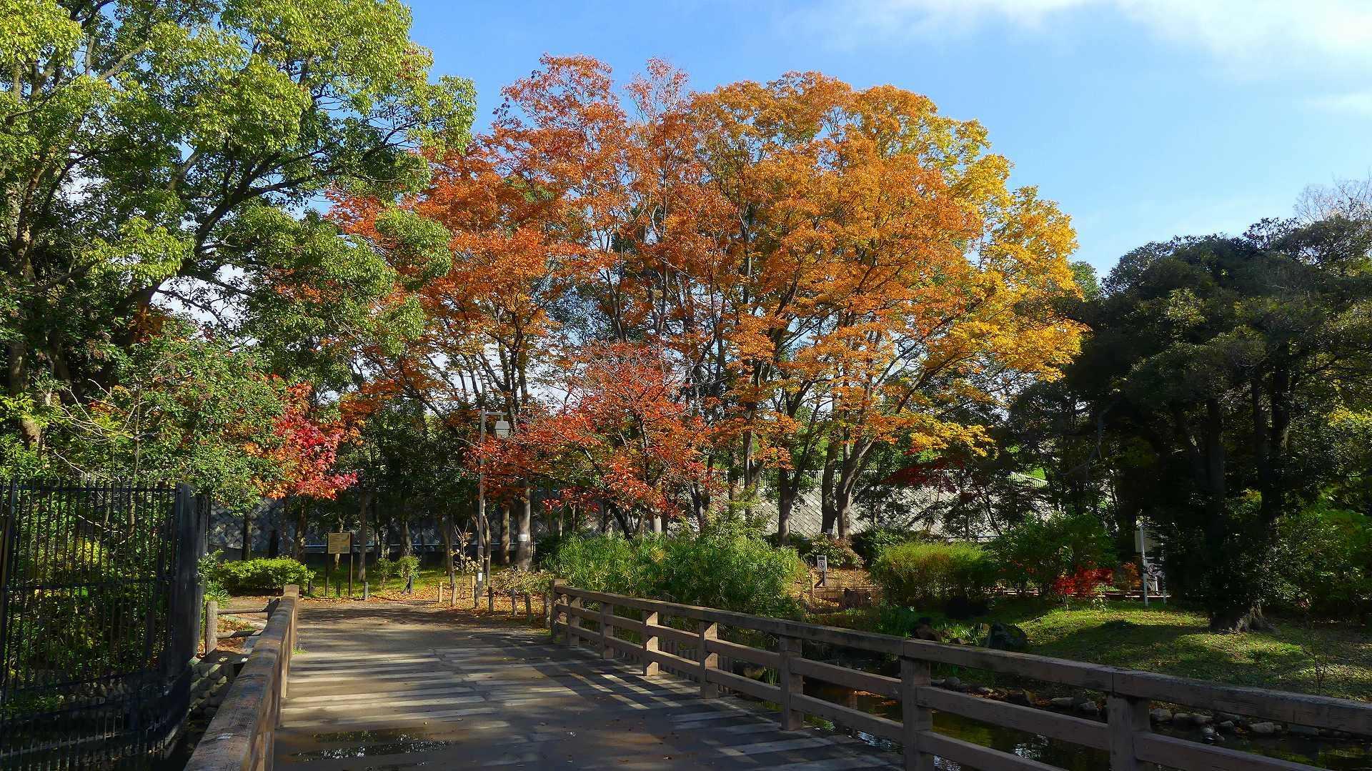 秋色の散歩道_a0185081_09402491.jpg