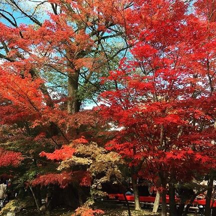 Kyoto_b0204691_15461619.jpg