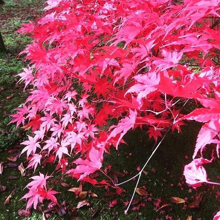 Kyoto_b0204691_15461754.jpg