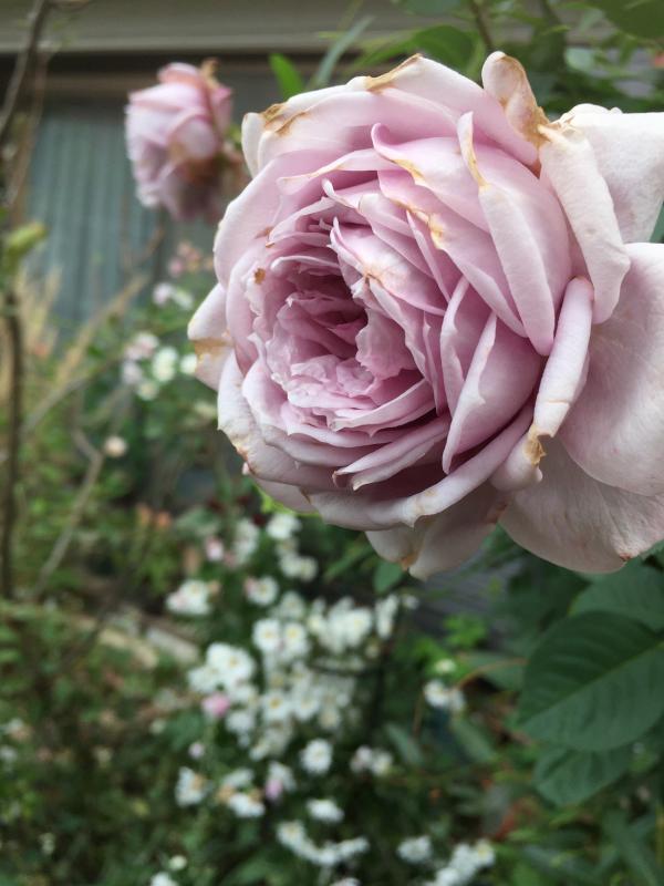 庭に元気をもらう_d0090298_20560454.jpg