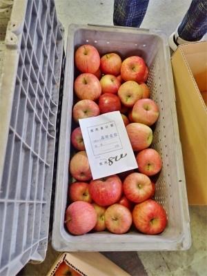 今年もリンゴの仕入れに長野県中野市へ_c0336902_20124711.jpg