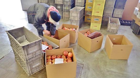 今年もリンゴの仕入れに長野県中野市へ_c0336902_20124766.jpg