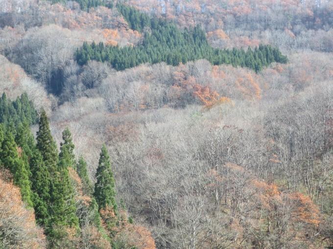 木々に『またよろしく❕』と伝えてきました。_a0214206_15364194.jpg