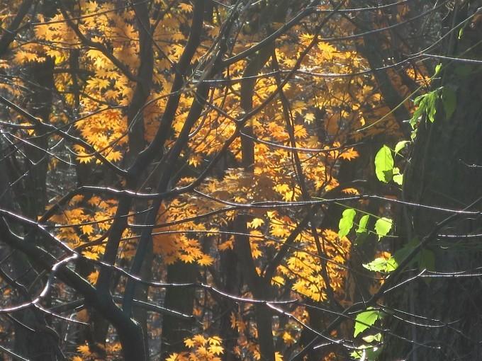 木々に『またよろしく❕』と伝えてきました。_a0214206_15410775.jpg