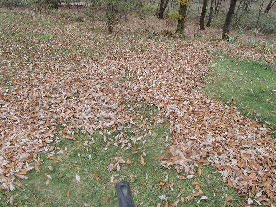 たった一日で大量の落ち葉が_f0064906_17293364.jpg