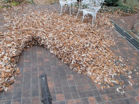 たった一日で大量の落ち葉が_f0064906_17390360.jpg