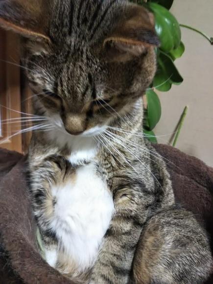 寝起きの猫としめ鯖寿司_f0316507_09144891.jpg
