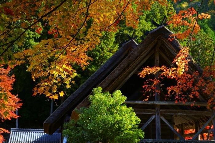 摩氣神社_e0177413_21175457.jpg