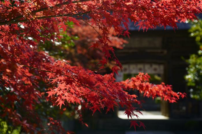 摩氣神社_e0177413_21180043.jpg