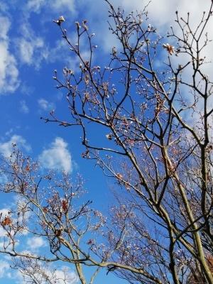 季節外れの?_c0289116_19260285.jpg