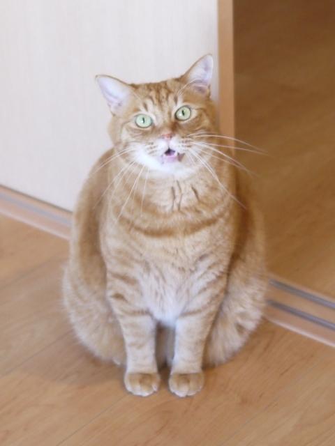 猫のお留守番 きなこくん編。_a0143140_22050880.jpg