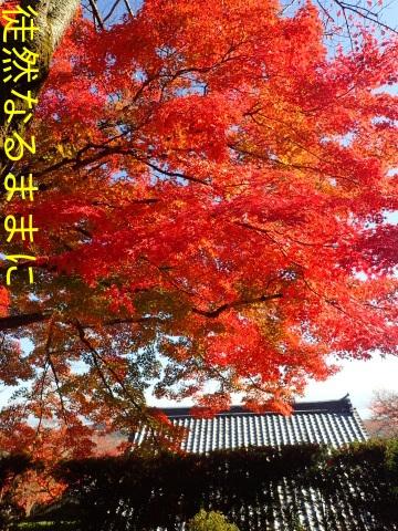 西教寺・坂本城跡_d0285540_07083869.jpg