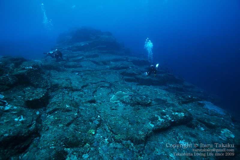 大隅諸島・黒島の海 -サンゴ調査より-_b0186442_20334163.jpg