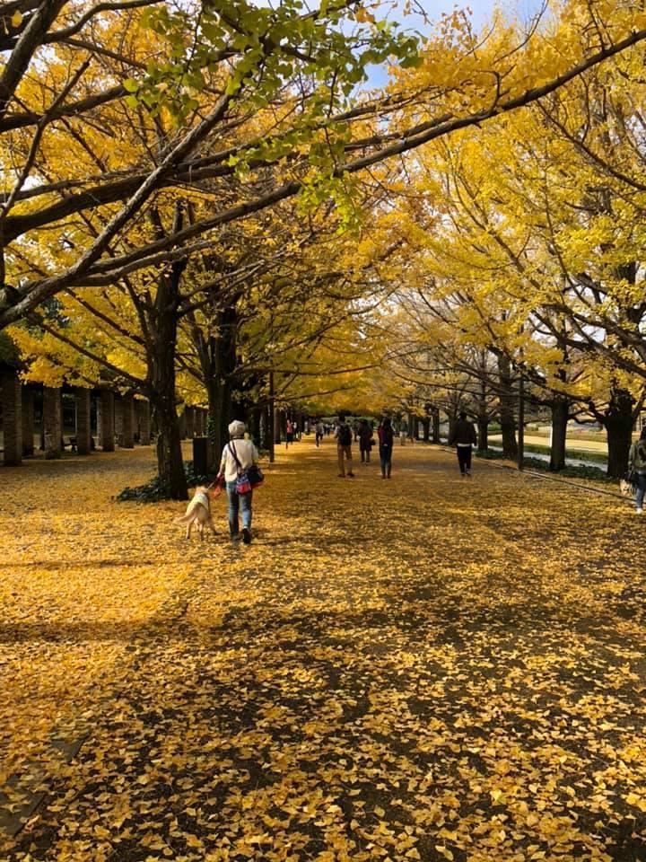 立川昭和記念公園に紅葉_f0070743_22553670.jpg