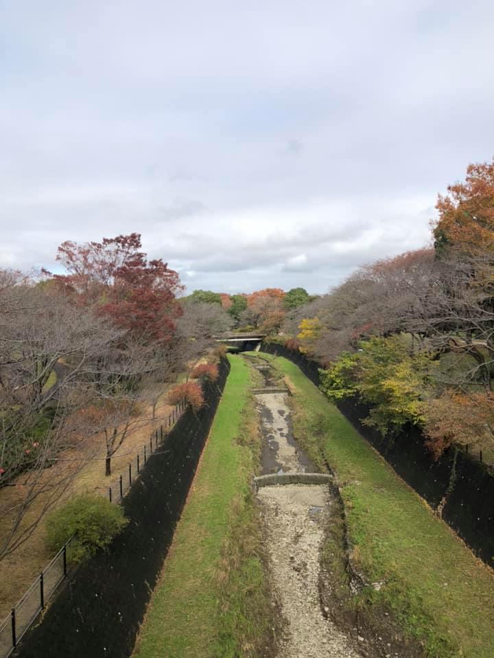 立川昭和記念公園に紅葉_f0070743_22553989.jpg