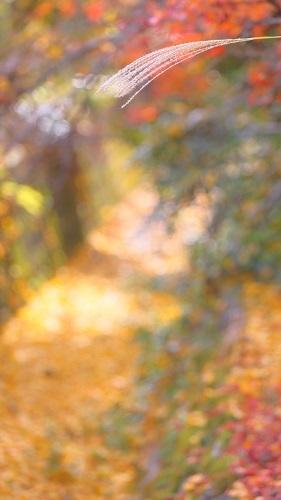 秋色の中で_e0241944_23033436.jpg