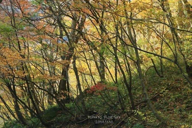 秋が終わってた。_c0145250_19481357.jpg