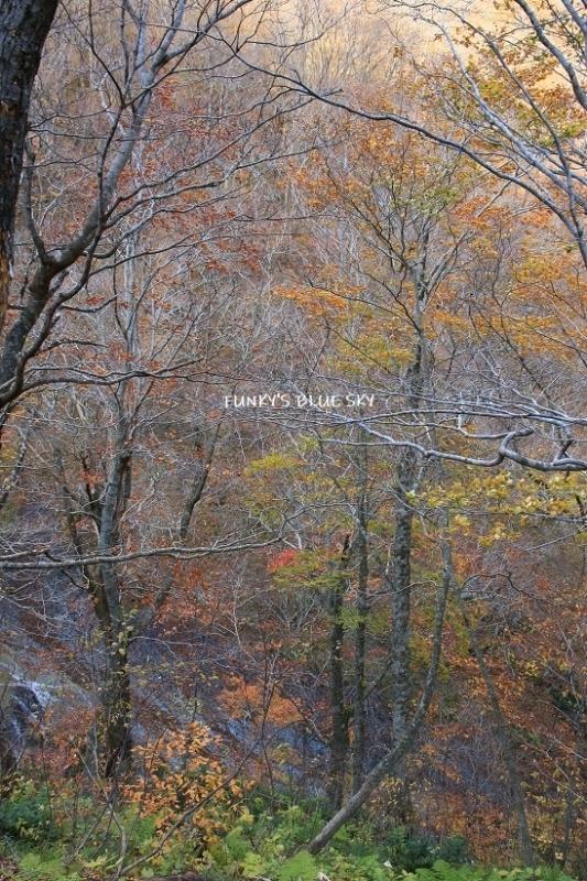 秋が終わってた。_c0145250_19483215.jpg