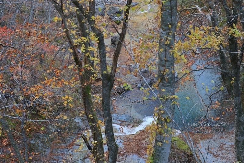 秋が終わってた。_c0145250_19505851.jpg