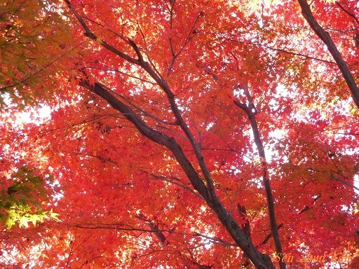 浄住寺の紅葉  2019年11月23日_a0164068_21401550.jpg