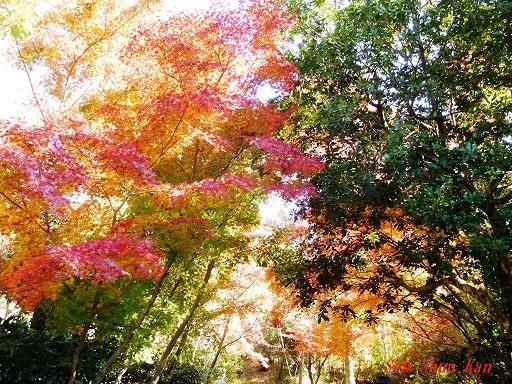 桂坂 野鳥遊園の紅葉  2019年11月23日_a0164068_23091717.jpg