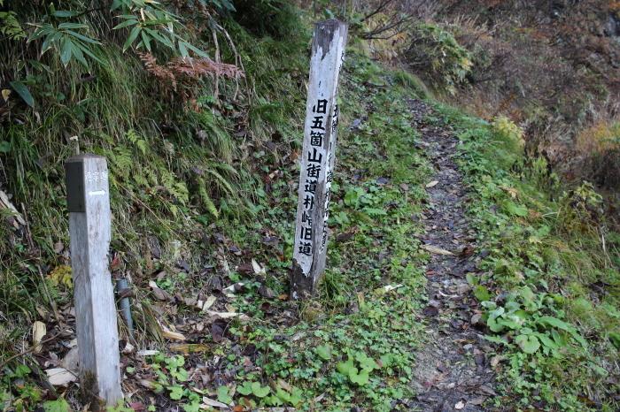 11月23日  高落葉山_f0223068_12342193.jpg