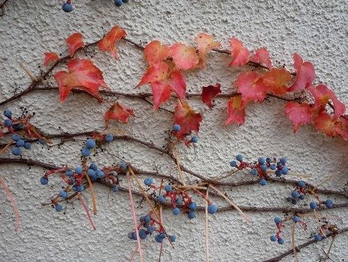 路傍の花、樹々の鳥(358) ~ ご近所の紅葉 ~_b0102572_10311172.jpg