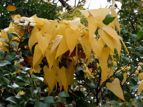 路傍の花、樹々の鳥(358) ~ ご近所の紅葉 ~_b0102572_17464166.jpg