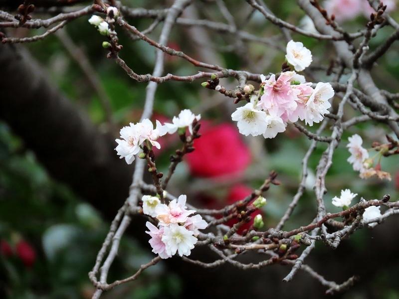 一茶忌の柿喰ふ椋鳥をゆるし置く   吉野義子_b0018682_15053253.jpg
