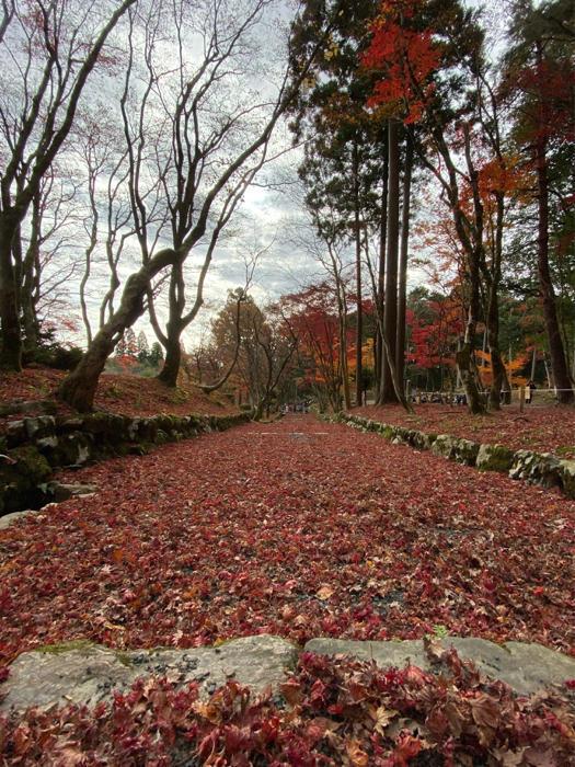 紅葉を見るツアーにお一人さま参加、豪華な土産まで〜_b0175688_21303439.jpg