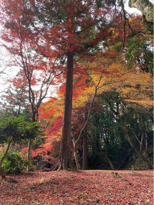 紅葉を見るツアーにお一人さま参加、豪華な土産まで〜_b0175688_21310049.jpg