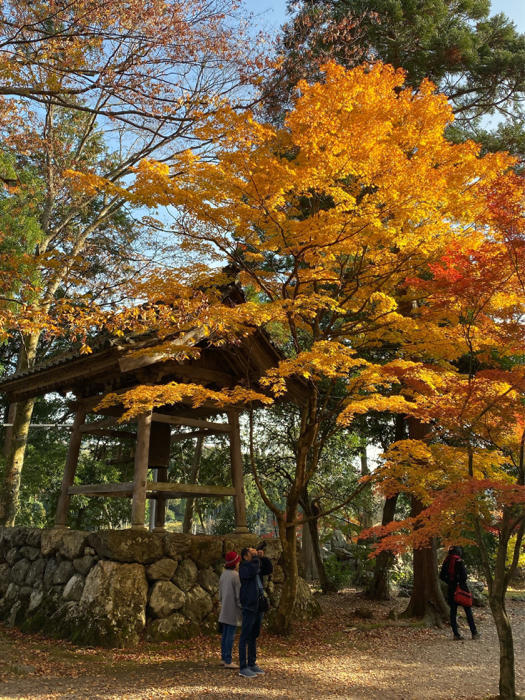 紅葉を見るツアーにお一人さま参加、豪華な土産まで〜_b0175688_21330702.jpg
