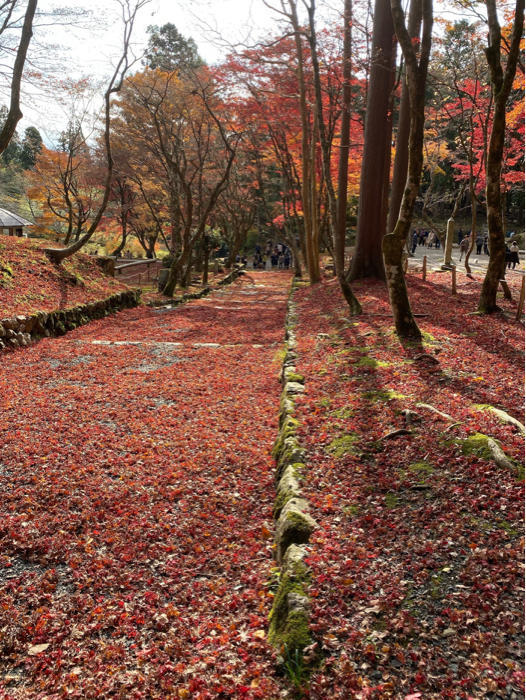 紅葉を見るツアーにお一人さま参加、豪華な土産まで〜_b0175688_21344614.jpg