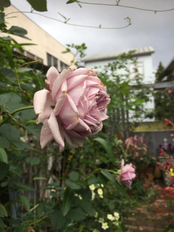 庭に元気をもらう_d0090298_20315540.jpg