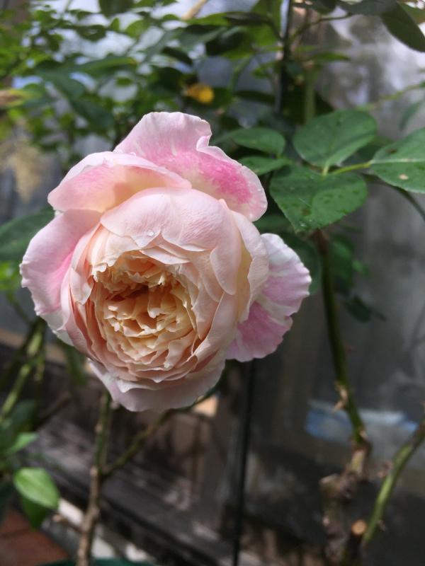 庭に元気をもらう_d0090298_20320253.jpg
