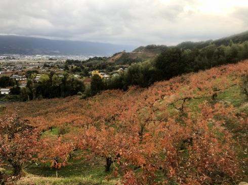 紅葉で真っ赤に染まる農園_f0018099_10383899.jpg