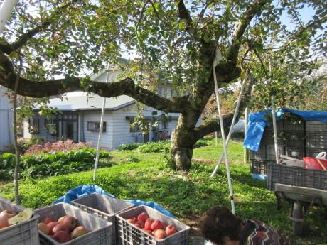 りんご畑へ_a0203003_17550422.jpg