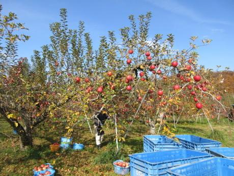 りんご畑へ_a0203003_17552806.jpg