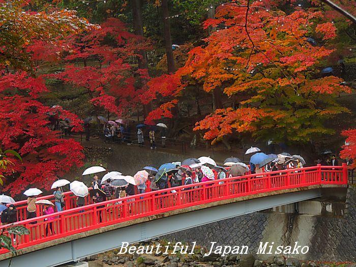 香嵐渓は傘の花☂・゚☆、・:`☆・・゚・゚☆。_c0067206_15055394.jpg