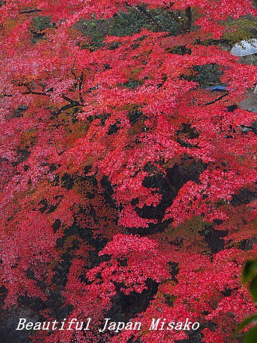 香嵐渓は傘の花☂・゚☆、・:`☆・・゚・゚☆。_c0067206_15055529.jpg