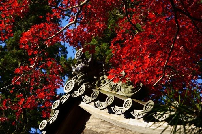 西明寺_e0177413_18260255.jpg