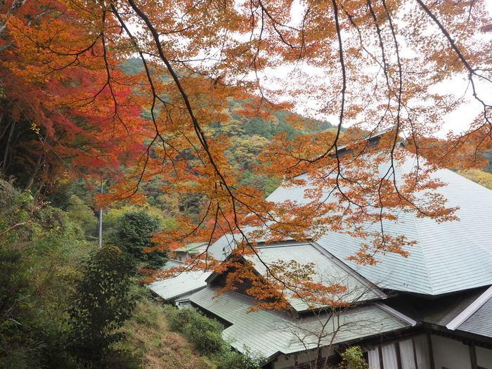 みかん狩り~西山興隆寺(日帰り無料バスツアー)_c0116915_00532548.jpg