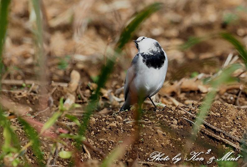 のんびりと田んぼで探鳥♪可愛い鳥さん達に会えました^^_e0218518_18462770.jpg