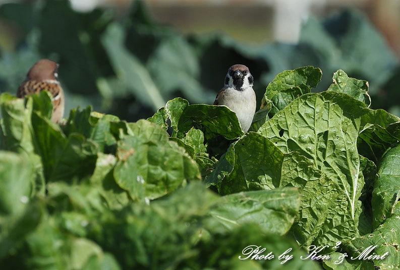 のんびりと田んぼで探鳥♪可愛い鳥さん達に会えました^^_e0218518_18480099.jpg