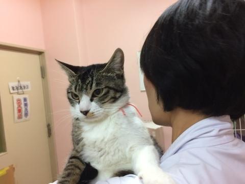 11/26 センターレポート【猫編】PART2_f0078320_01355257.jpeg