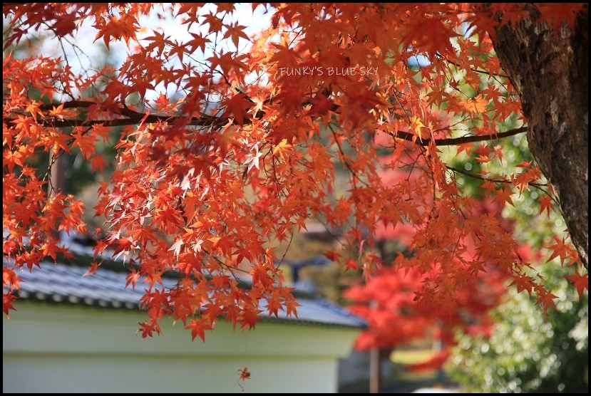 もみじと仙台城址_c0145250_08410570.jpg